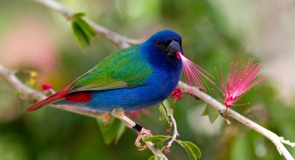 ptichki-amadiny-4
