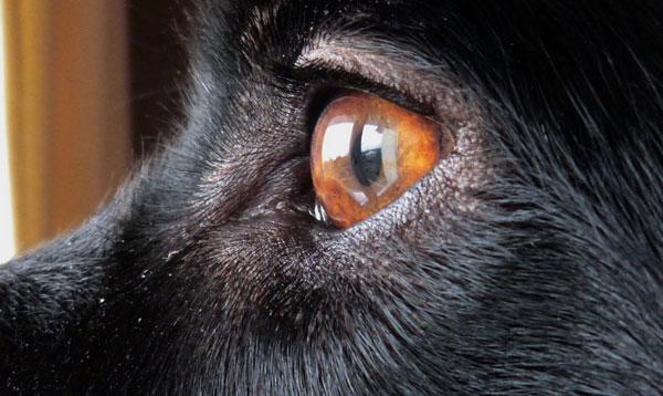 Зрение у собаки - как видит собака