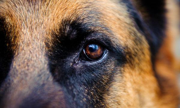 Как видит собака