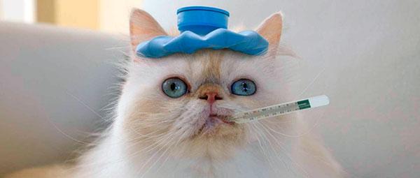 Симптомы аллергии у кошек