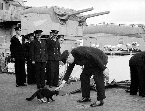 У маряков есть свои приметы: если кошка заходит на пришвартованное к пристани судно, но спустя время покидает его, значит, оно обречено на гибель