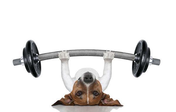 Физические нагрузки для собаки должны быть посильными и разумными