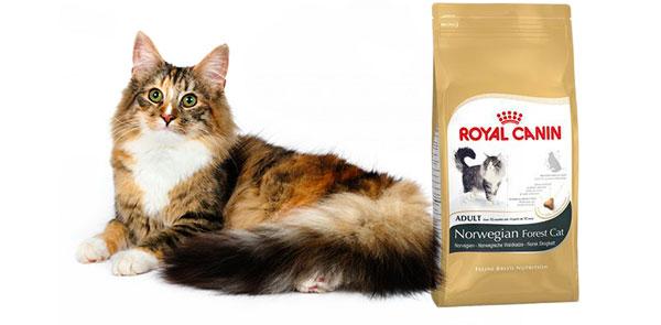 При покупке норжского котенка стоит доверяеть бридеру и прислушаться к его советам по рациону