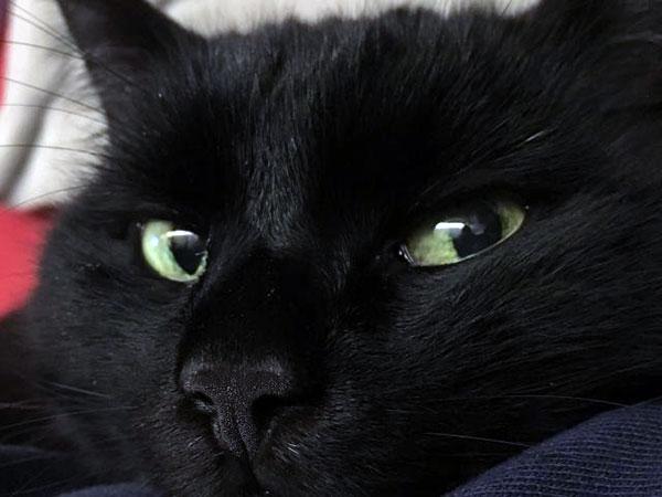В XIX веке жители России убивали черных кошек ради реализации шкурок