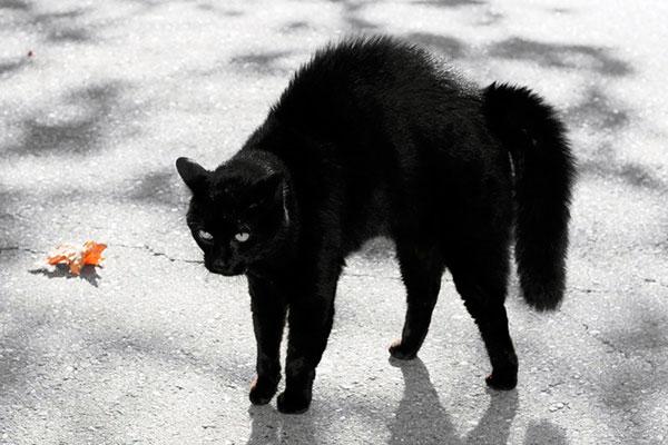 Одной из страшных примет - коты с черным мехом предвещают нищету и голод