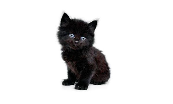 Многие жители будут счастливы получить в подарок черного котенка - это свидетельством особого уважения
