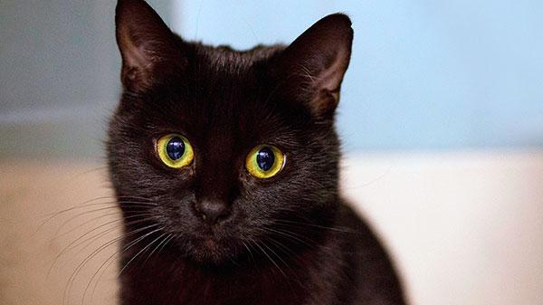 Русские ведьмаки и знахари держали у себя котов, что бы пугать или наводить на них порчу