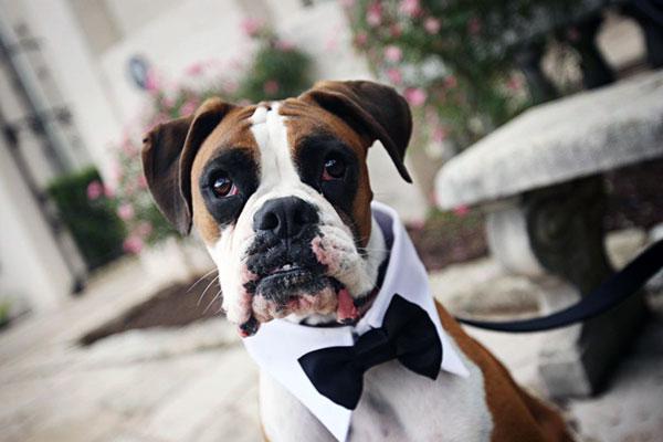 Чем больше званий и регалий соберт ваша собака, тем выше будет спрос в дальнейшем