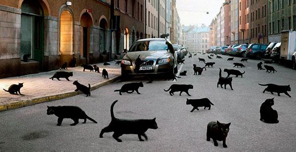 Прежде чем паниковать наблюдайте, в какую сторону побежала черная кошка: если к застежке на одежде – насторожитесь, в противном случае – не обращайте внимание