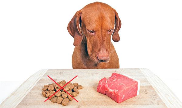 Мясо, за исключением свинины - отличный рацион при линьке у собаки