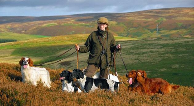 Охотничьи породы собак обладают уравновешенной психикой и отличной сообразительностью