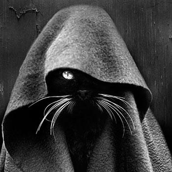Почему люди боятся черных кошек
