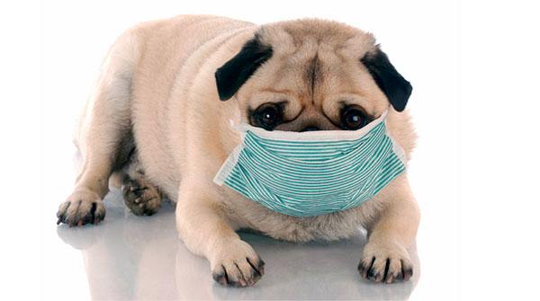 Здорового пса может внезапно проявиться аллергия как на незнакомую пищу