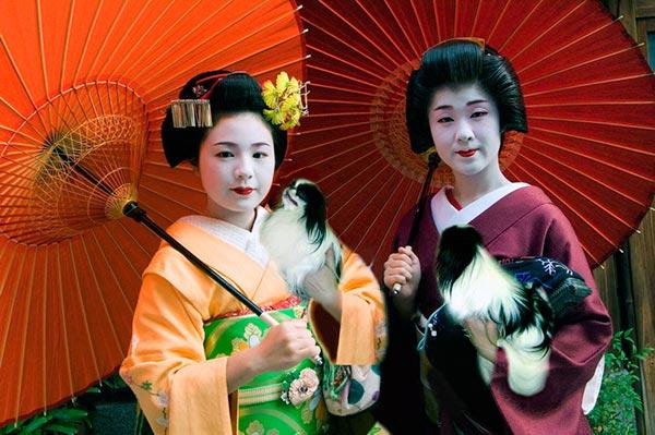 Породы собак: Японский хин