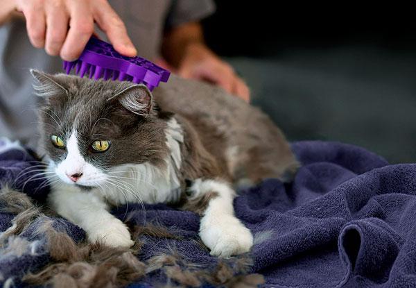 Стрижка кошки, кота