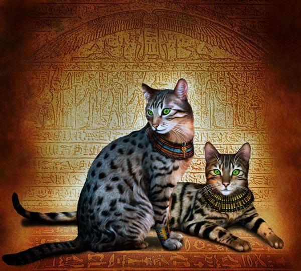 Породы кошек: Египетский мау