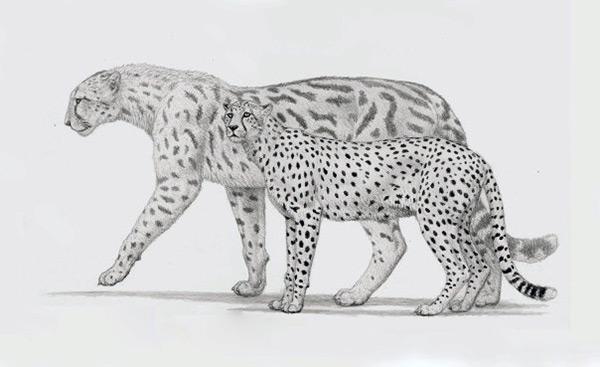 Вымерший вид гепардов - Европейский