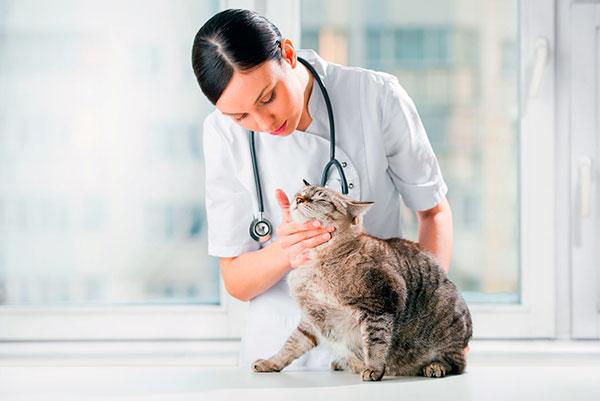 Признаки выраженной сексуальной активности поможет решить ветеринар