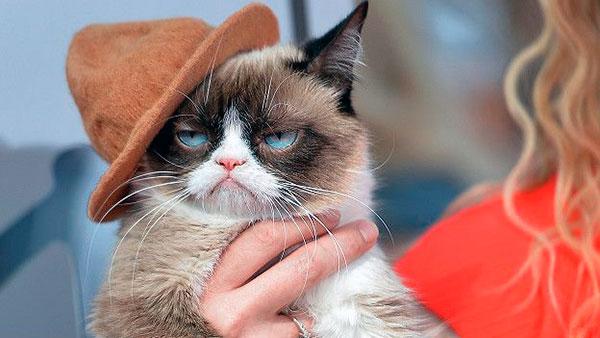 Половозрелый кот также невыносим