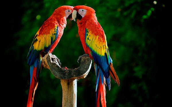 Стоимость попугая складывается из окраса, возраста и вида