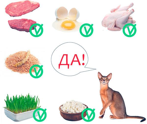 Питание абиссинской кошки натуральными продуктами