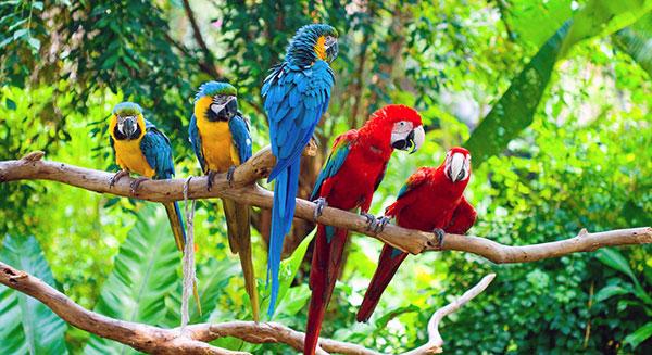 Как выглядят разные виды попугая ара