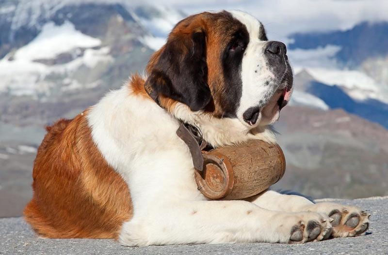 Дрессируя собаку, не прибегайте к принуждению, крику и физическим наказаниям
