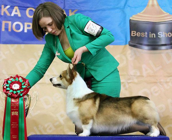 Выставка собак - Show-класс и Тop-класс