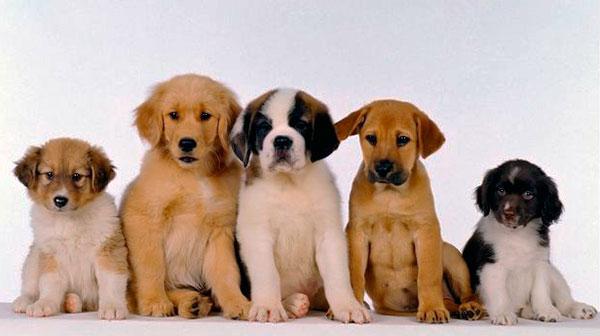 Выставка собак - Рet-класс