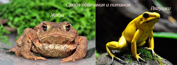 Где обитают и чем питаются жабы и лягушки