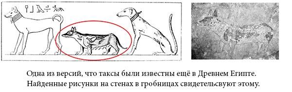 Породы собак: Такса