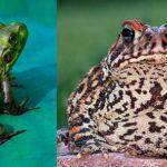 Сходства и различия жабы и лягушки