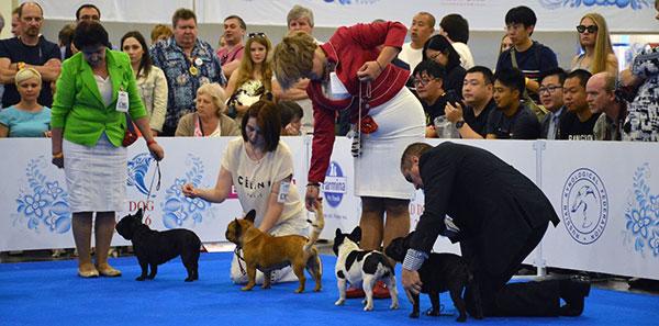 Выставка собак - Intermediate-класс