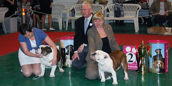 Выставка собак - Junior-класс