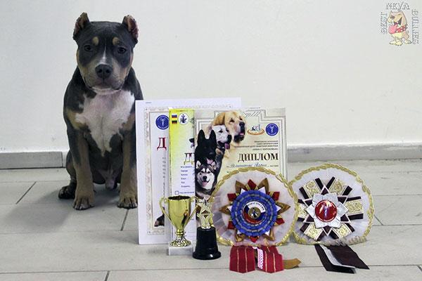 Выставка собак - Рuppy-класс