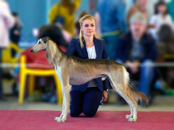 Выставка собак - Сhampion-класс