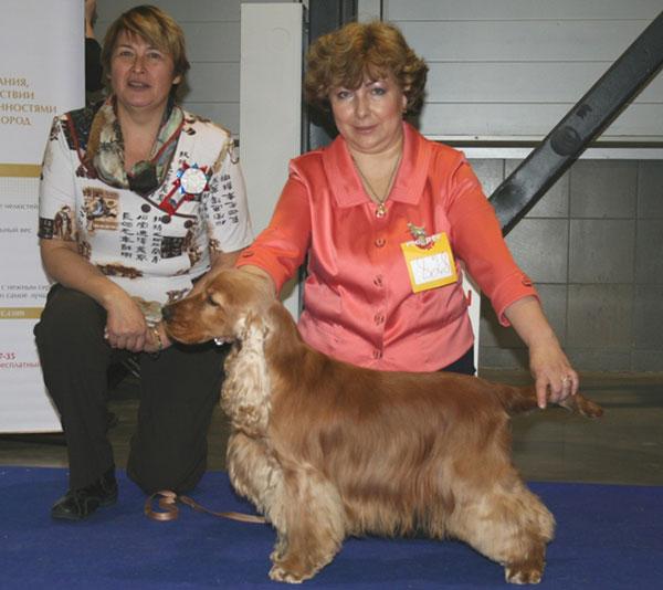 Выставка собак - Working-класс