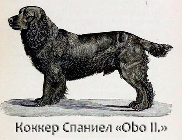 Породы собак: Английский коккер-спаниель