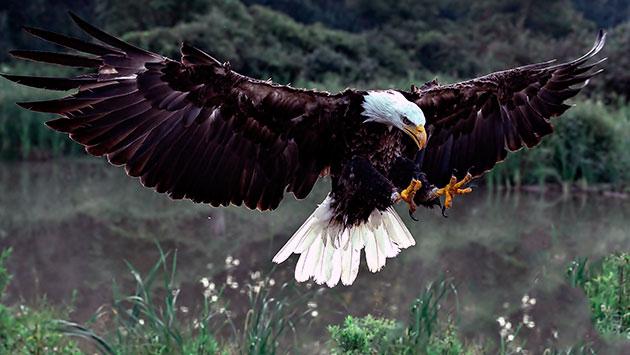 Ареал обитания белоголового орлана США,Канада и частично Мексика