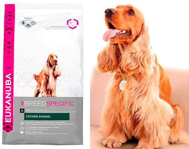 Коккер-спаниелю рекомендуют давать готовые корма супер премиум класса и не забывать, что собака склонна к перееданию