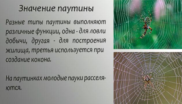 Наиболее частое назначение паутины - поймать добычу