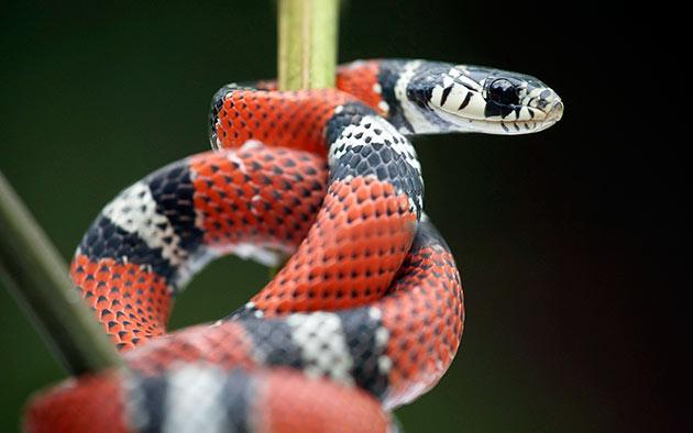 При покупке змеи, следует обратить внимание на её вес, внешний вид шкуры и её подвижность