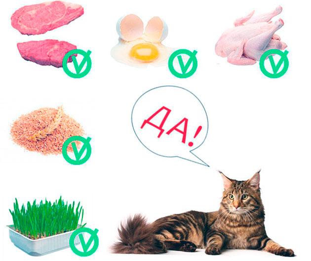 Мейн кунов, помимо фабричных кормов можно баловать и натуральными продуктами