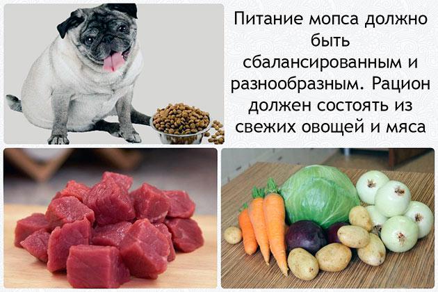 Если вы решили кормить мопса натуральными продуктами, заранее продумайте, что бы его рацион был сбалансированный и разнообразный