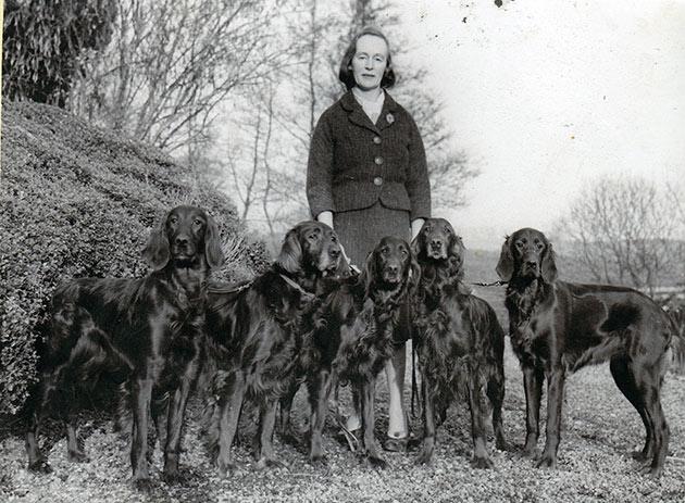 Породы собак: Ирландский сеттер