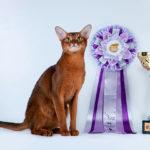 Что такое класс кошки: шоу, брид, пэт