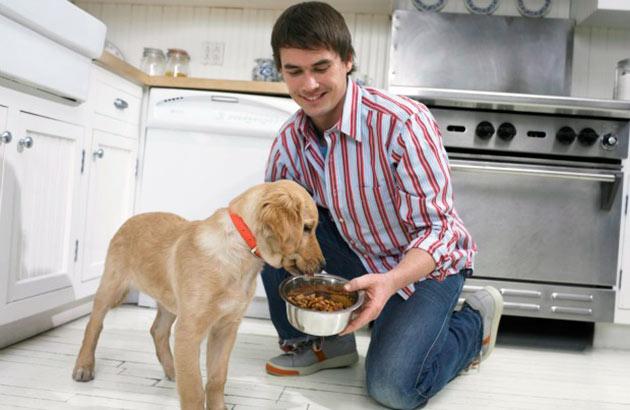 Холистики для собак рейтинг