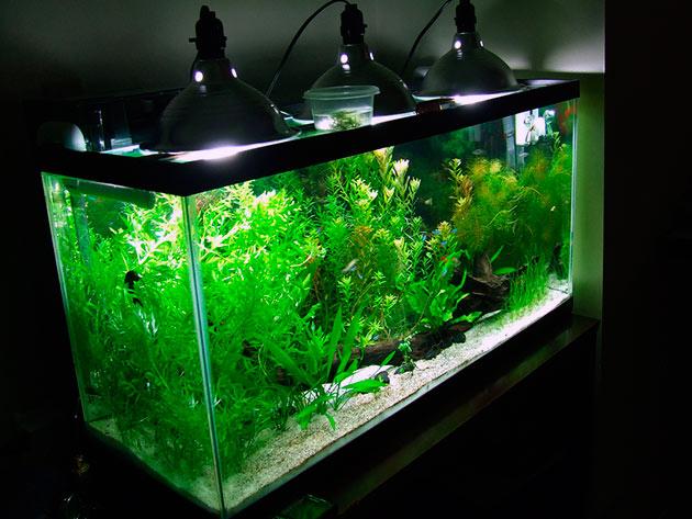 Подсветка должна быть только искусственной - желательно люминесцентной из расчета 0.5 ватт на литр