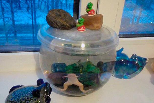 Аквариумные лягушки могут легко простудиться, поэтому отнеситесь к этому вопросу с должным вниманием