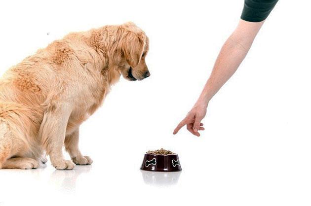Кормить собаку во время беременности желательно влажными или натуральными продуктами